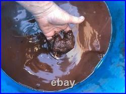 Versatile Brumby XS1 Bore/well water/mud/silt pump diy